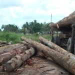 Linden labourer crushed to death by log at Blueberry Hill sawmill