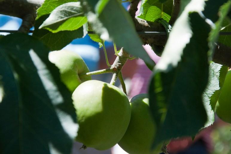 Summer Pruning Workshop at St Erth