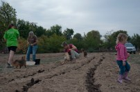 planting in furrows with bd compost