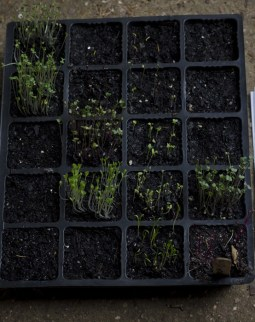 next planting002