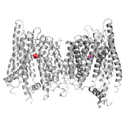 Nitrate transporter NRT1.1