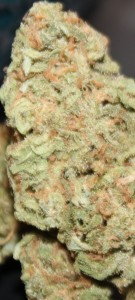 Kosher Dream Marijuana Strain Review