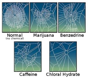 The effect of drugs on spiders webs. Photo: NASA