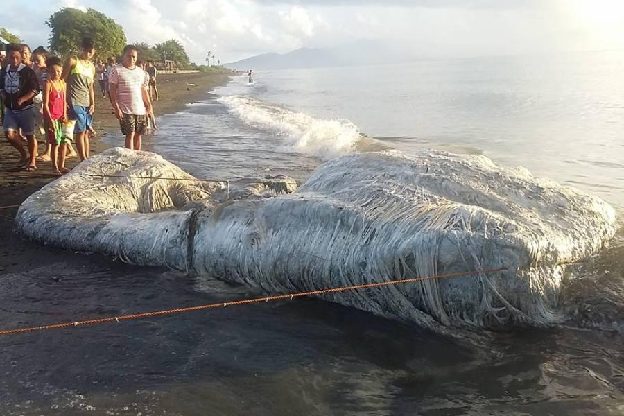Τρόμος στις Φιλιππίνες – Ένα μαλλιαρό πλάσμα ξεβράστηκε σε ακτή (εικόνες)