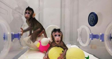 Scientists clone monkeys, raising excitement and concern 2
