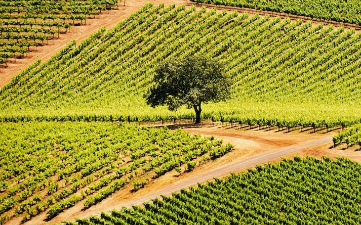 10 Under-the-Radar Places Wine Lovers Need to Visit Now 7