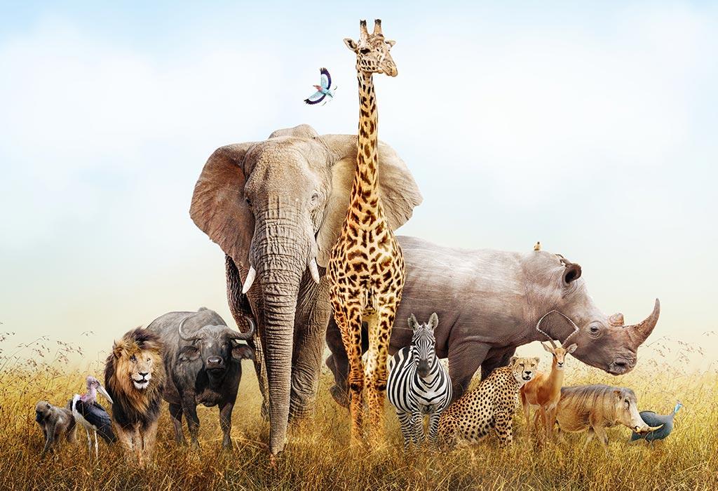 Animals-Day