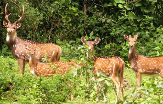 koshi-tappu-wildlife