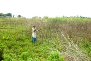 बाढीबाट लाखौंको रहर दाल खेती नष्ट