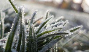 Vague de froid