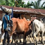 Government Can't Ban Open Grazing – Miyetti Allah Kautal Hore