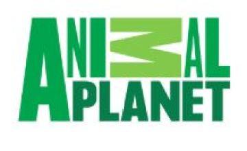 Animal Planet (English)