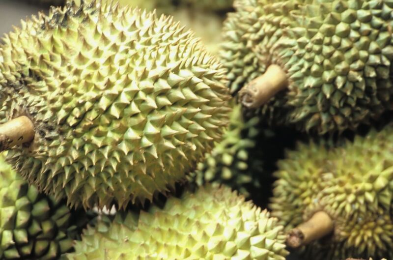 Durian batteries‽