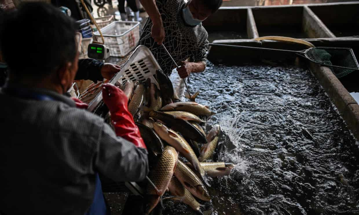 What exactly is a wet market?