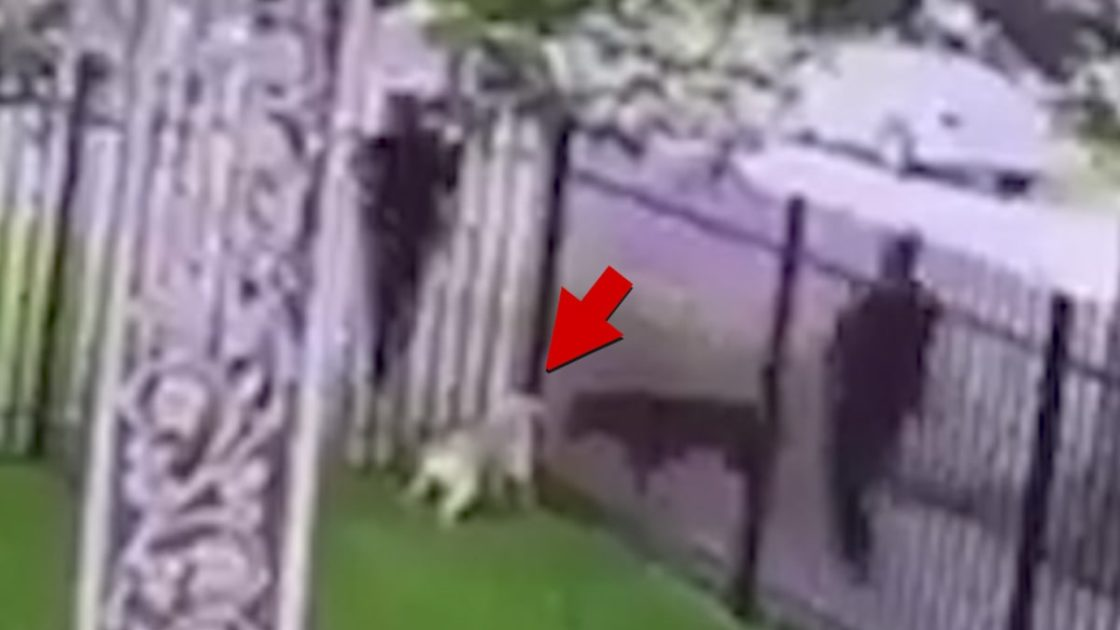 Detroit Cop Shoots Dog In It's Own Fenced Yard