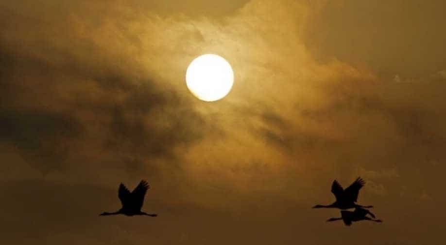Birds 'falling out of the sky' in mass die-off in south-western US
