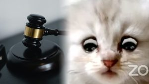 'I'm not a cat.' Lawyer can't figure out how to turn off kitten filter during Zoom court appearance