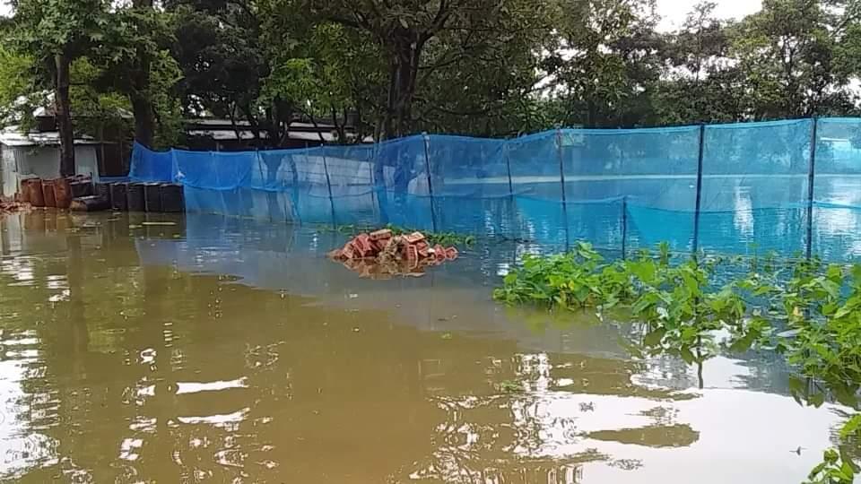 সুনামগঞ্জের ধর্মপাশায় বন্যায় ভেসে গেছে ৩৪২টি পুকুরের মাছ