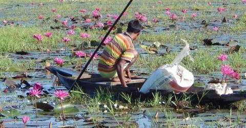 তাহিরপুরের পর্যটন কেন্দ্র লাল-শাপলার বিকি বিলের সৌন্দর্য রক্ষার্থে প্রশাসনের মাইকিং