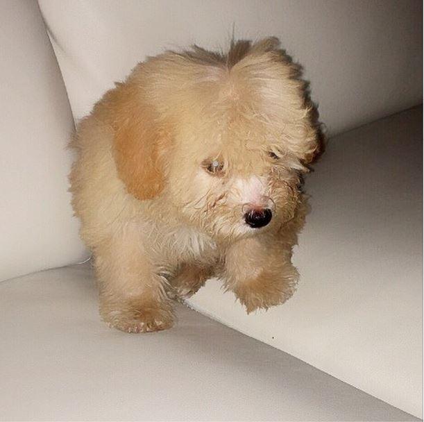 Tiwas-Puppy