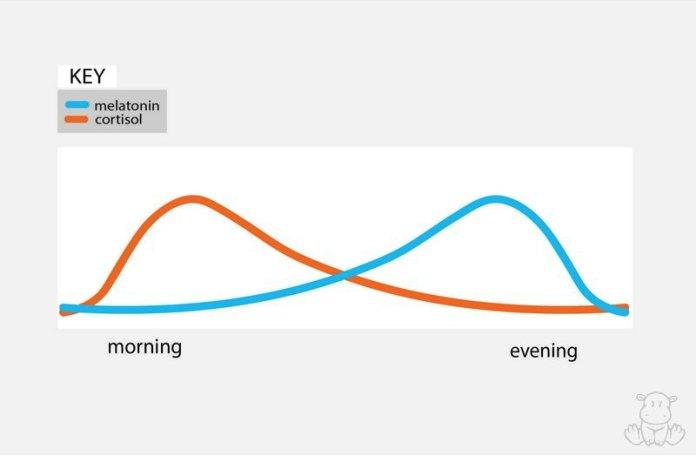 melatonin cortisol graph