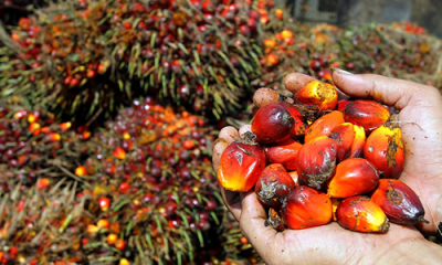 Nigeria spends N116.3bn on palm oil