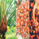 Palm oil ban: Need to plug deficit