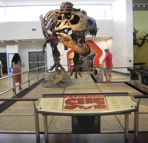 Discovery Museum, Reno, Nevada, T. rex, Sue, exhibit, NV