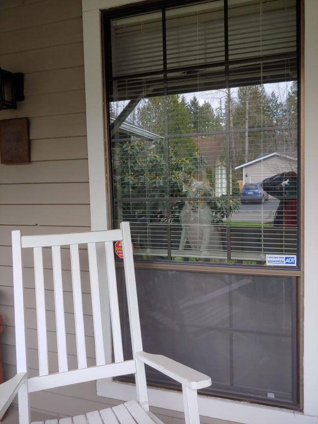 My front porch with dog looking out the window and rocking chair