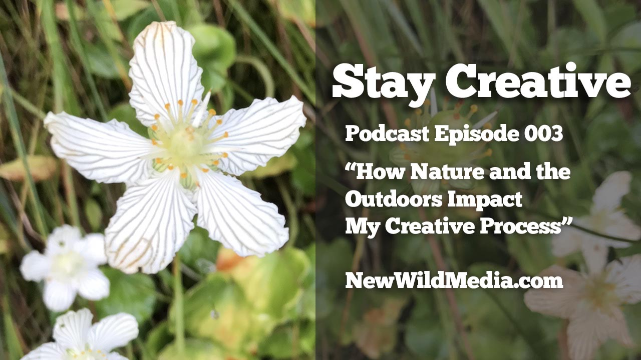 Stay Creative nature outdoors mystery creativity SCP003 1280