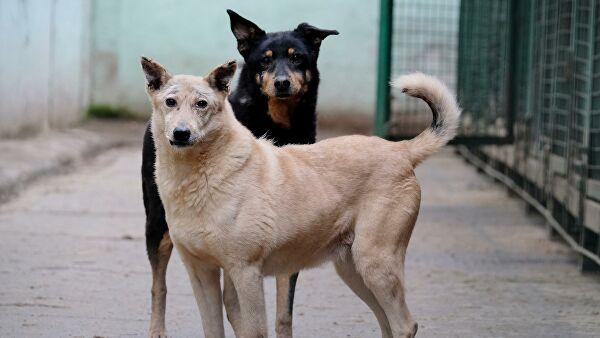 В ГД предложили выделить из бюджета средства на приюты для животных