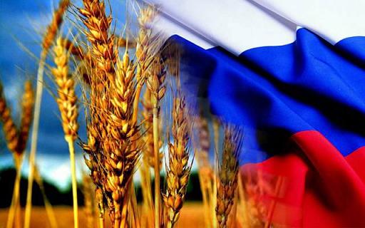 Bloomberg рассказал о мировом дефиците российской пшеницы