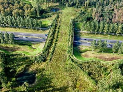 В России выпустят стандарт о переходах автодорог для животных
