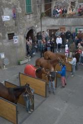 07. Horses 2