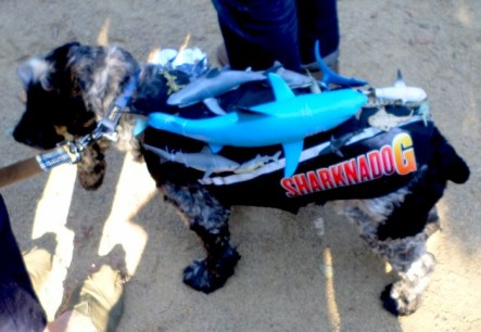 dogparade2