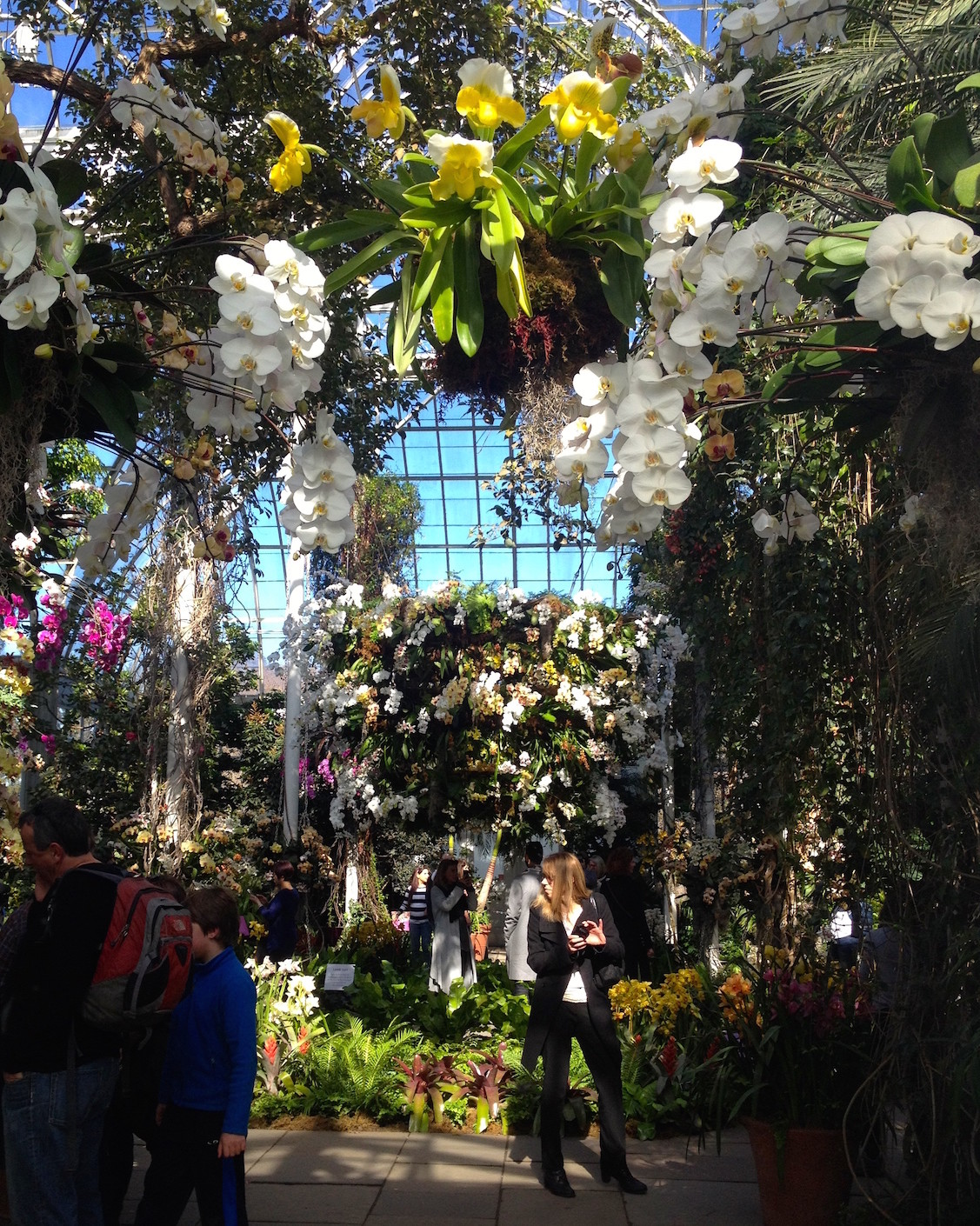 On the bright side at the beautiful nybg orchid show the orchid show chandeliers is the pride and joy of the nybg its a joy to any spring starved new yorker for the cost of an imax movie you get the full mozeypictures Gallery