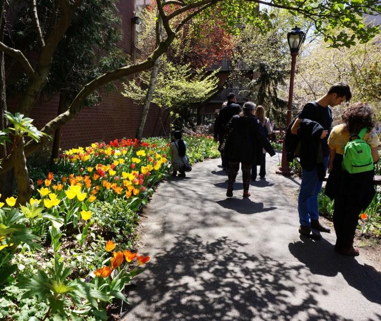 tulip-festival-garden-nyc