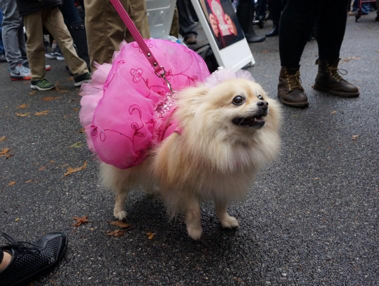 halloween-dog-parade-pom-queen