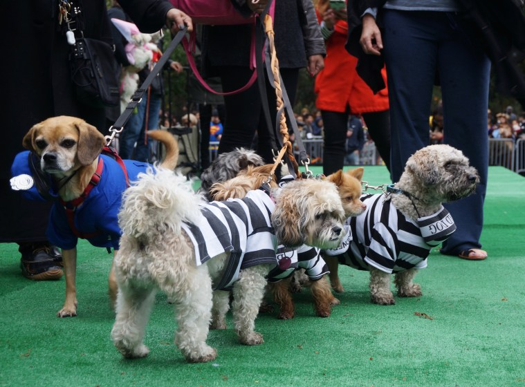 halloween-dog-parade-chain-gang