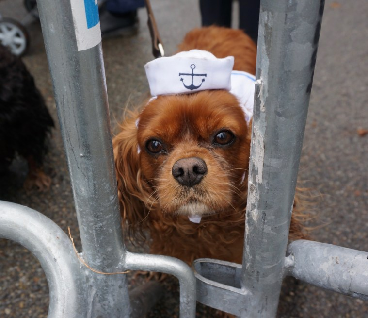 halloween-dog-parade-hello-sailor