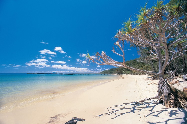 Fraser Island - Laurie Wang