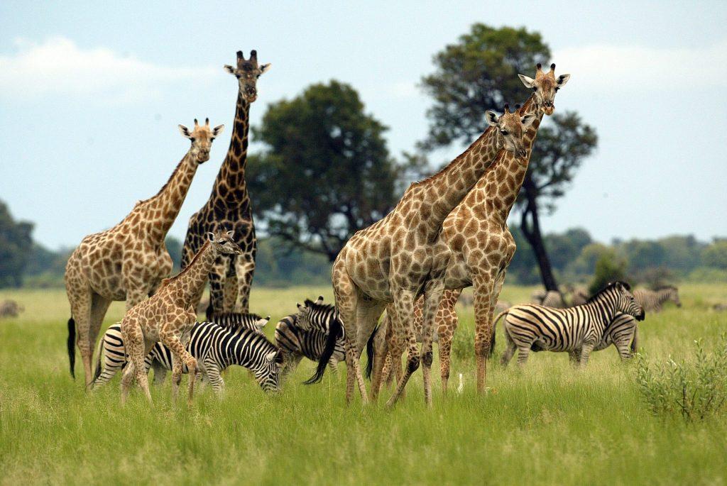 wildlife in zimbabwe, safari
