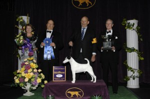 2013 terrier winner 300x199 2013 Westminster Dog Show