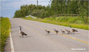 It is dangerous to cross at a mid-block pedestrian ramp
