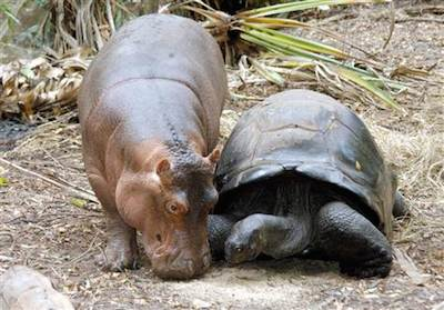 This image is an amazing animal friendship corresponding with the amazing proposed NYC parking laws