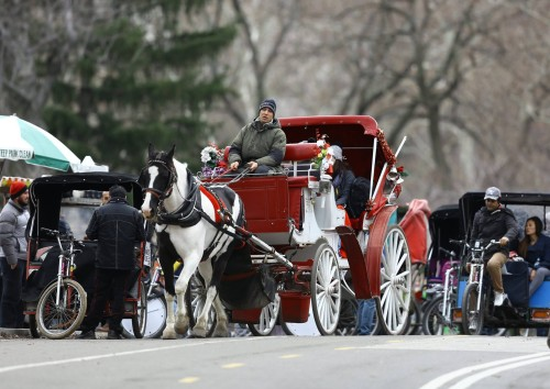 New York Style at Horse Carriage Central Park