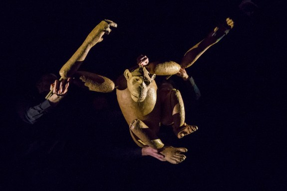 Chimpanzee 4. pic by Richard_Termine