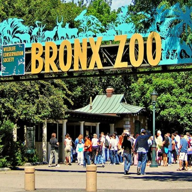 Tiger Mountain, zoo du Bronx