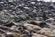 Seehunde bei der Ohau Seal Colony