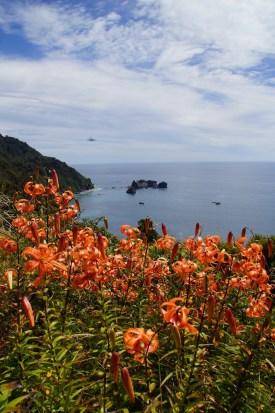 die Tasman Sea